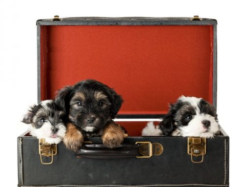 Our top tips for moving house with pets